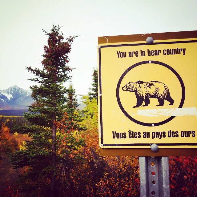 Welcome to the great white North, a.k.a. #bearcountry. #canada #bear #yukon #kluane #greatwhitenorth #travel #wanderlust #roadtrip #thriftynomads