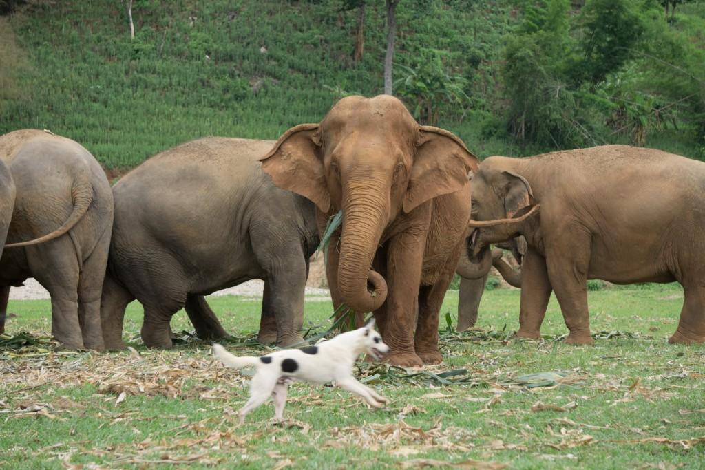 Elephant Nature Park, Chiang Mai