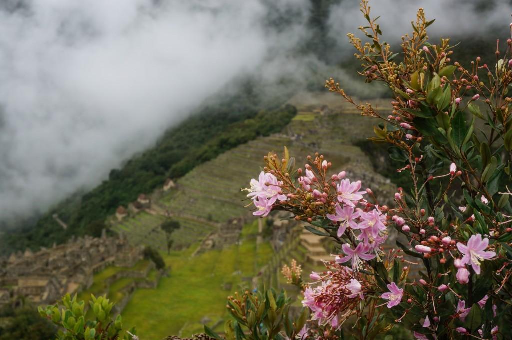 Machu Picchu rain