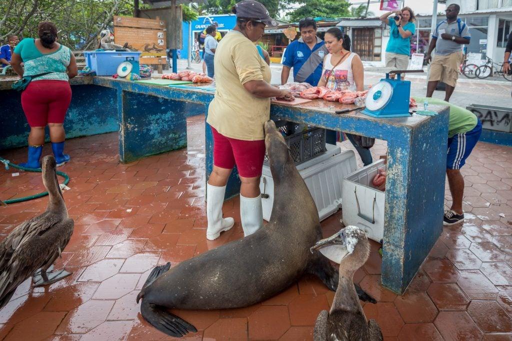 Puerto Ayora market