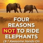 4 Reasons Not to Ride Elephants (& 1 hands-on alternative)