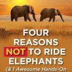 4 Reasons Not to Ride Elephants (& 1 hands-on alternative)