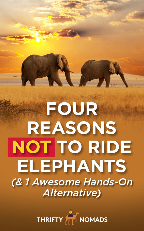 Elephant riding is a cruel practice that many tourists are unaware of. Here\'s 4 reasons you shouldn\'t ride elephants, & one hands-on alternative. #responsibletravel