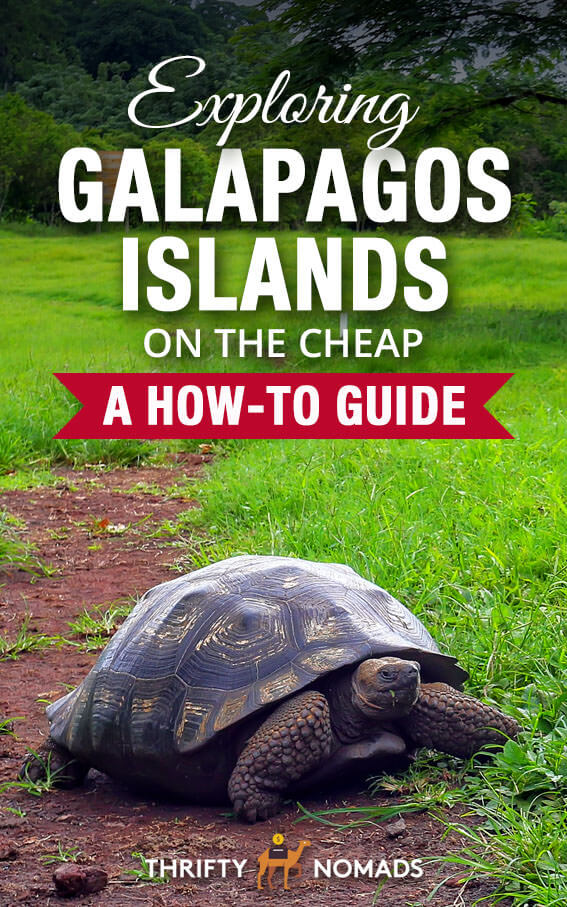 The Galapagos have LOTS of cheap & free activities on offer. Here\'s our ultimate guide to exploring the Galapagos on a budget! #galapagos #galapagosislands #galapagoscheap #galapagosbudget